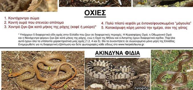 Φίδια της Ελλάδας